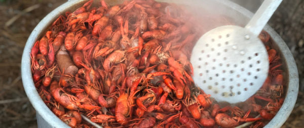 Fresh Boiled Crawfish With Sausage In Stock Pot With Grated Spatula